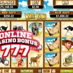 White Rhino Video Slots Games Reviews At RTG Casinos
